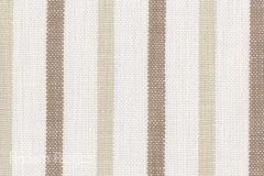 Perennials Rowdy Stripe Sandpiper
